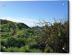 Acrylic Print featuring the photograph Green Hills And Bushes Landscape by Matt Harang