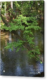 Acrylic Print featuring the photograph Green Is For Spring by Skip Willits
