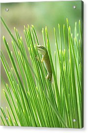 Acrylic Print featuring the photograph Green Is Good by Peg Urban