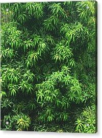 Green Is Life Acrylic Print