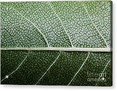 Green Leaf Geometry Acrylic Print