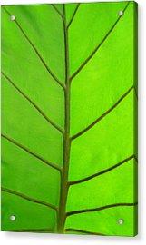 Green Leaf Acrylic Print by Marcus Adkins