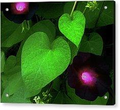 Green Leaf Violet Glow Acrylic Print