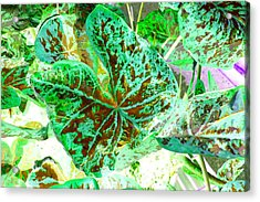 Acrylic Print featuring the photograph Green Leafmania 1 by Marianne Dow