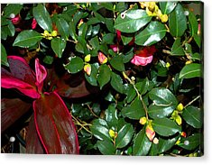 Green Leafs And Pink Flower Acrylic Print by Michael Thomas