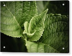 Acrylic Print featuring the photograph Green Leaves Abstract II by Marco Oliveira