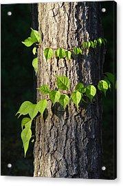 Green Leaves At Walden Pond Acrylic Print by Christina Solstad