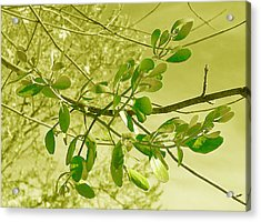 Green Leaves Acrylic Print by Russ Mullen