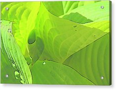 Green Leaves Sketch 2 Acrylic Print