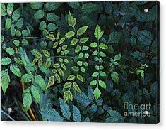 Green Leaves Acrylic Print by Viktor Savchenko