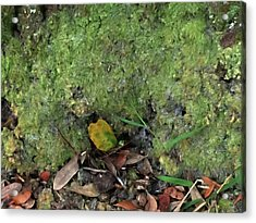 Green Man Spirit Photo Acrylic Print by Gina O'Brien