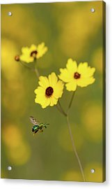Green Metallic Bee Acrylic Print