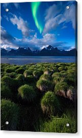 Green Night Acrylic Print