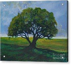 Green Oak Acrylic Print by Michele Hollister - for Nancy Asbell