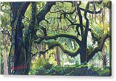 Green Oaks Acrylic Print by David Randall
