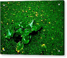 Green On Green Acrylic Print by Ron Plasencia