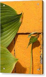 Green On Orange 4 Acrylic Print by Art Ferrier
