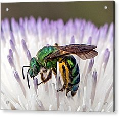 Green Orchid Bee Acrylic Print