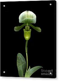 Green Orchid Acrylic Print by Christian Slanec