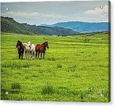 Green Pastures Acrylic Print by Jon Burch Photography