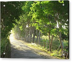 Green Path Acrylic Print by Barbara Marcus