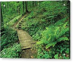 Green Path Acrylic Print by Jim Nelson