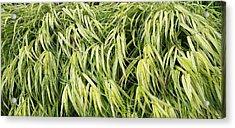 Green Plants Acrylic Print