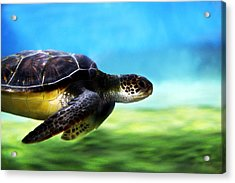 Green Sea Turtle 2 Acrylic Print by Marilyn Hunt