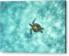 Green Sea Turtle In Under Water Acrylic Print by M.M. Sweet