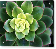 Green Sunburst Acrylic Print