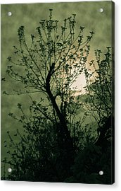 Green Sunset Acrylic Print