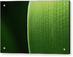 Green Acrylic Print by Susette Lacsina