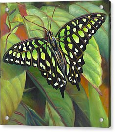 Green Tailed Jay Butterfly Acrylic Print by Nancy Tilles