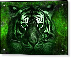 Green Tiger Acrylic Print by Michael Cleere