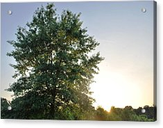 Green Tree Bright Sunshine Background Acrylic Print