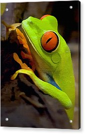 Green Tree Frog Acrylic Print by Sharon Foster