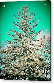 Green Tree Acrylic Print by Lisa Phillips
