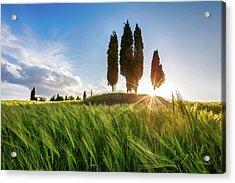 Green Tuscany Acrylic Print by Evgeni Dinev