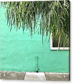Green Wall With Leaves Acrylic Print