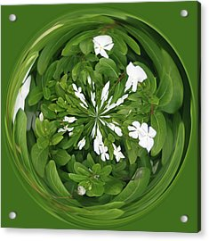 Green-white Orb Acrylic Print by Bill Barber