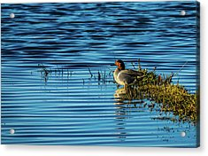 Green-winged Teal Acrylic Print
