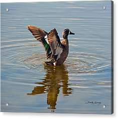 Blue Winged Teal Acrylic Print