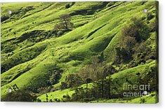 Greener Pastures Acrylic Print by Matt Tilghman