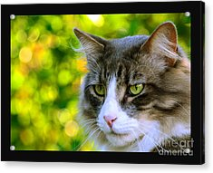 Greeneyes In Forest Acrylic Print