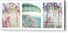 Acrylic Print featuring the photograph Greenhouse Blossoms Triptych by Jessica Jenney