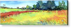 Greenville Hayfield Acrylic Print by Virgil Carter