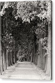 Greeted By Trees Acrylic Print by Wim Lanclus