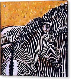 Grevy Colt Acrylic Print by Dy Witt