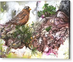 Acrylic Print featuring the painting Grey Crown Rosy Finch by Sherry Shipley