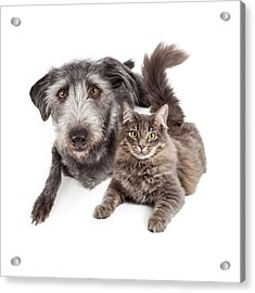 Grey Dog And Cat Laying Closely Together Acrylic Print